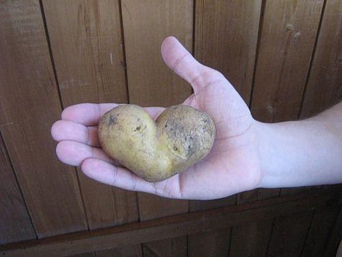 Чим корисний картопляний сік - як його пити