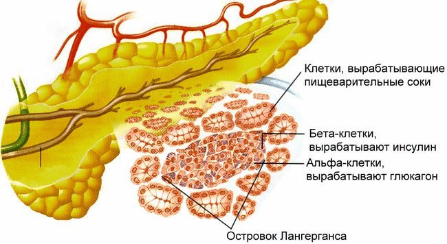 Що таке і як виробляються ферменти підшлункової залози