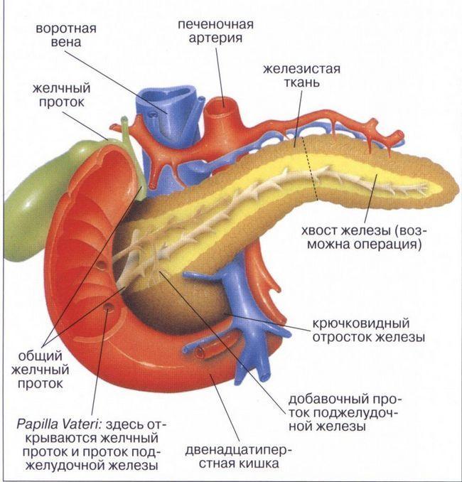 Дифузні зміни підшлункової залози: що це таке і як лікується