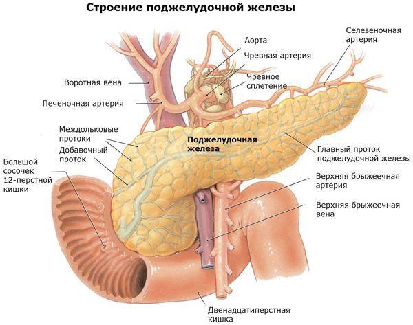 Ехогенності підшлункової залози підвищена: що це таке і як це вилікувати