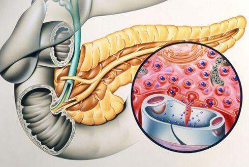 Яка роль в організмі панкреатичної еластази