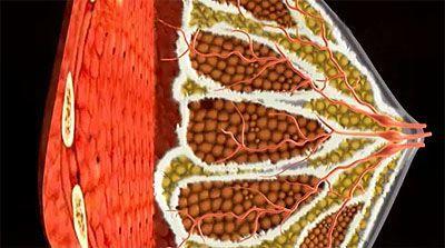 Чому набухає, збільшується і болить груди перед місячними