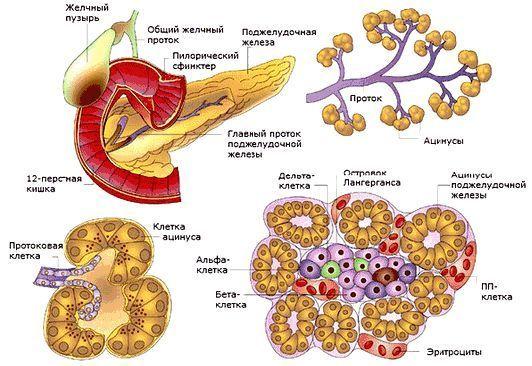 Корисні властивості гороху - для кісток, суглобів і загального обміну речовин