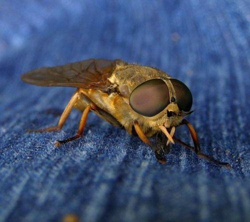 Укуси комах - лікування